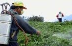 Imagem de um trabalhador do campo espargindo agrotóxicos em uma lavoura.