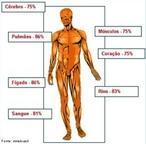 A água do corpo humano