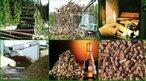 Para a geração de energia, o termo biomassa abrange os derivados recentes de organismos vivos utilizados como combustíveis ou para a sua produção. Na definição de biomassa para a geração de energia excluem-se os tradicionais combustíveis fósseis, embora estes também sejam derivados da vida vegetal (carvão mineral) ou animal (petróleo e gás natural), mas são resultado de várias transformações que requerem milhões de anos para acontecerem. A biomassa pode considerar-se um recurso natural renovável, enquanto que os combustíveis fósseis não se renovam a curto prazo. <br/><br/> Palavras-chave: Biomassa. Energia renovável. Energia.