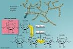 Ilustração que mostra um detalhe da molécula de glicogênio. O glicogênio ou glicogênio é um polissacárido e a principal reserva energética nas células animais, encontrado, principalmente, no fígado e nos músculos. Geralmente também é encontrado nos fungos. <br/><br/> Palavras-chave: Glicogênio. Polissacarídeo. Química do carbono.