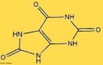 Representação da molécula de ácido úrico. O ácido úrico é um composto orgânico de carbono, nitrogênio, oxigênio e hidrogênio. Sua fórmula química é C5H4N4O3. O ácido úrico é encontrado na urina em pequenas quantidades (o produto de excreção principal é a ureia). Em alguns animais, como aves e répteis é o principal produto de eliminação, e é expulso com as fezes. O alto teor de nitrogênio no ácido úrico é a razão pelo qual o guano é tão valioso como fertilizante na agricultura. No sangue humano, a concentração de ácido úrico entre 3,5 e 7,2 mg/dL é considerada normal pela Associação Médica Americana, podendo ser encontrado em níveis mais baixos nos vegetarianos. A gota é uma denominação associada a níveis anormais de ácido úrico no organismo. A saturação de ácido úrico no sangue humano pode dar lugar a um tipo de cálculo renal quando o ácido cristaliza nos rins. Uma considerável percentagem de enfermos com gota chegam a ter cálculos renais do tipo úrico. <br/><br/> Palavras-chave: Ácido úrico. Molécula. Funções orgânicas.