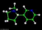 Representação tridimensional da molécula de Nicotina. É uma substância alcaloide básica, líquida e de cor amarela, que constitui o princípio ativo do tabaco. Provoca cancro nos pulmões devido à metilização que ocorre no DNA (liga um radical metila, CH3). A pirrolidina (nicotina) sofre reações metabólicas (com NO+), oxidação e abertura do anel transformando-se em 4-(n-metil-n-nitrosamino)-1-(3-piridil)-1-butanona (CETONA) e 4-(n-metil-n-nitrosamino)-4-(3-piridil)-butanal (ALDEÍDO). O nitrosamino possui uma forma de ressonância onde um carbocátion é facilmente doado a uma base nitrogenada do DNA (guanina, citosina, adenina ou timina), causando uma falha de transcrição, levando à possibilidade de desenvolvimento do câncer. Nomenclatura IUPAC: 3-[(2S)-1-methylpyrrolidin-2-yl]pyridine. Fórmula Molecular: C10H14N2. Massa Molar: 162,26 g/mol. <br/><br/> Palavras-chave: Moléculas. Nicotina. Substâncias químicas. Drogas.