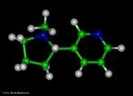 Representação tridimensional da molécula de Nicotina é o nome de uma substância alcaloide básica, líquida e de cor amarela, que constitui o princípio ativo do tabaco. Provoca cancro nos pulmões devido à metilização que ocorre no DNA (liga um radical metila, CH3). A pirrolidina (nicotina) sofre reações metabólicas (com NO+), oxidação e abertura do anel transformando-se em 4-(n-metil-n-nitrosamino)-1-(3-piridil)-1-butanona (CETONA) e 4-(n-metil-n-nitrosamino)-4-(3-piridil)-butanal (ALDEÍDO). O nitrosamino possui uma forma de ressonância onde um carbocátion é facilmente doado a uma base nitrogenada do DNA (guanina, citosina, adenina ou timina), causando uma falha de transcrição, levando à possibilidade de desenvolvimento do câncer. Nomenclatura IUPAC: 3-[(2S)-1-methylpyrrolidin-2-yl]pyridine. Fórumula molecular: C10H14N2. Massa molar: 162,23 g/mol <br/><br/> Palavras-chave: Nicotina. Alcaloides. Drogas. Química orgânica.