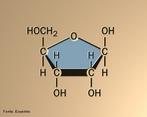 Representação de uma molécula de ribose que é o açúcar do RNA, enquanto que a molécula de desoxirribose é o açúcar do DNA. <br/><br/> Palavras-chave: Ribose. RNA. Açúcar.