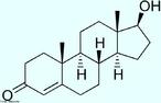 Testosterona é um hormônio esteroide produzido tanto nos Homens quanto nas Mulheres. Nos homens pelos testículos (os quais também produzem espermatozoides e uma série de outros hormônios que controlam o desenvolvimento normal e funcionamento), nos indivíduos do sexo feminino, pelos ovários, e, em pequena quantidade em ambos, também pelas glândulas suprarrenais. Vale ressaltar que a síntese da testosterona é estimulada pela ação do LH (hormônio luteinizante), que por sua vez é produzido pela pituitária anterior (adenohipófise ou simplesmente hipófise). A testosterona é responsável pelo desenvolvimento e manutenção das características masculinas normais, sendo também importante para a função sexual normal e o desempenho sexual. Apesar de ser encontrada em ambos os sexos, em média, o organismo de um adulto do sexo masculino produz cerca de vinte a trinta vezes mais a quantidade de testosterona que o organismo de um adulto do sexo feminino, tendo assim um papel determinante na diferenciação dos sexos na espécie humana. Fórmula molecular C19H28O2. Massa molar 288,43 g/mol. Nomenclatura IUPAC (sistemática) 17b-hidróxi-4-androsten-3-um <br/><br/> Palavras-chave: Testosterona. Hormônios. Química orgânica. Doping.